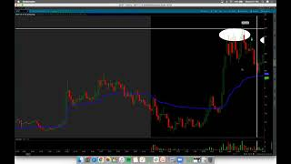 Finding an EDGE Going LONG In This Market $FLGC $GRVI Recaps w/ Harry & Tosh*